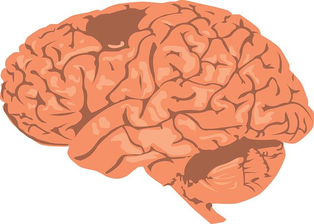 brain-308580_640
