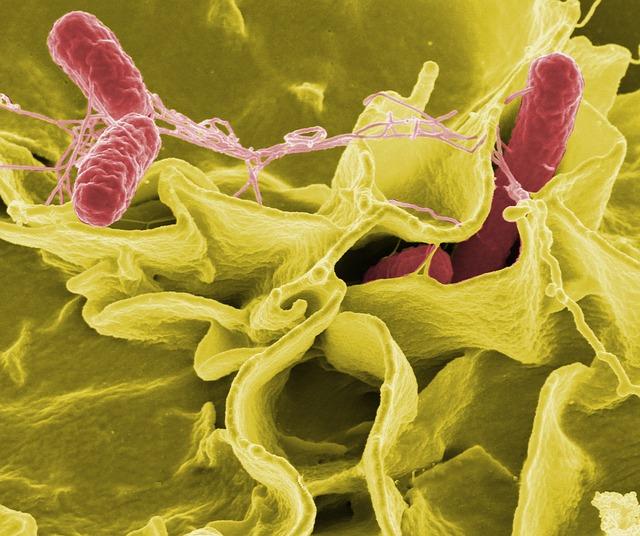 bacteria-67659_640