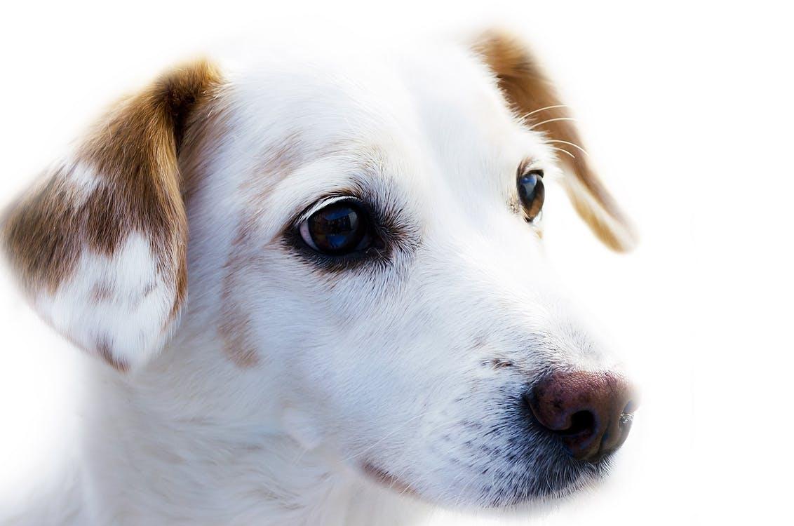dog-animal-friend-loyalty-67304